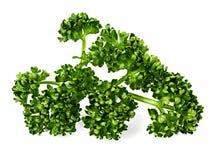 Zielona kędzierzawa pietruszka Fotografia Royalty Free