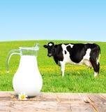zielona łąka krowy Zdjęcie Royalty Free