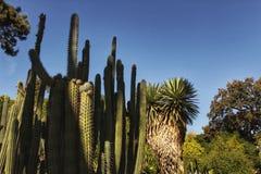 Zielona kaktusowa tekstura Obraz Stock