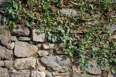 zielona kamienna ściana Obraz Royalty Free