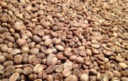 Zielona kawa Zdjęcie Stock