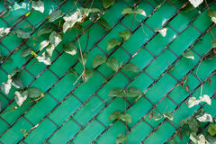 Zielona klingerytu metalu i ogrodzenia siatka izoluje teksturę Obraz Stock