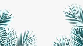 Zielona kokosowa liść rama odizolowywająca na białym tle ilustracji