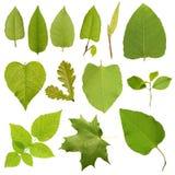 zielona kolekci wysokość opuszczać postanowienia drzewa zdjęcia stock