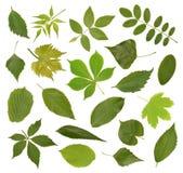 zielona kolekci wysokość opuszczać postanowienia drzewa Obraz Stock