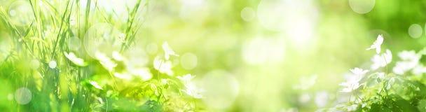 Zielona krajobrazowa panorama z wiosna kwiatami Zdjęcie Stock