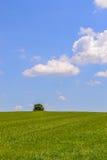 zielona krajobrazowa wiosna Fotografia Stock