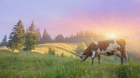zielona krowy łąka składu projekta elementu natury raj Fotografia Stock