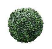 Zielona krzak sfera odizolowywająca na białej tło fotografii Obraz Royalty Free