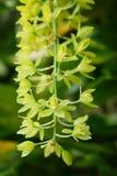 zielona kwiat orchidea Zdjęcia Royalty Free
