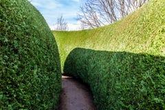 Zielona labirynt sekcja na jaskrawym słonecznym dniu obrazy stock