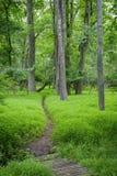 Zielona las ścieżka Obraz Royalty Free