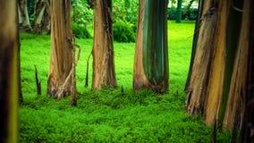 Zielona Lasowa scena Zdjęcie Stock