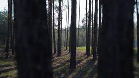 Zielona Lasowa sosna Czarodziejskiego lasu Nieporuszona ?wierczyna Lasu wz?r zdjęcie wideo