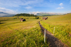 Zielona lato ziemia uprawna Obraz Stock