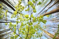 Zielona liść gałąź nad niebieskim niebem Obraz Royalty Free