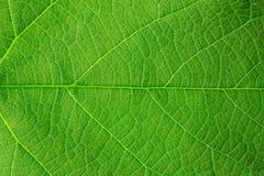 zielona liść konstrukcji Obrazy Royalty Free