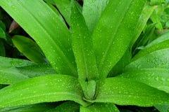 Zielona liść kropla woda po deszczu Zdjęcia Stock