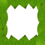 Zielona liść rama fotografia stock