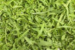 Zielona liść sałata Obraz Stock