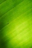 Zielona liść tekstura Fotografia Royalty Free