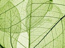 Zielona liść tekstura Obraz Stock