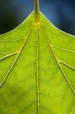 Zielona liść tekstura na błękitnym tle Zdjęcie Stock