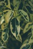 Zielona liść tekstura, tło i Zamyka w górę widoku zielony liść zielone liści schematu Zdjęcie Stock
