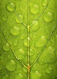 Zielona liść tekstura z wodną kropelką Zdjęcia Royalty Free
