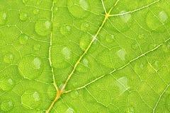 Zielona liść tekstura z wodną kropelką Zdjęcie Royalty Free