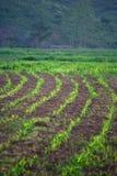 zielona lina zdjęcie royalty free