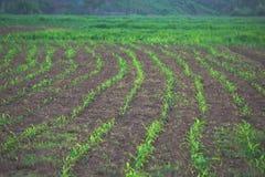zielona lina fotografia royalty free