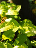 Zielona młoda cierpnięcie roślina obrazy stock