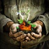 Zielona młoda roślina Zdjęcia Royalty Free