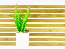 Zielona mała roślina w drewnianym tle Zdjęcia Stock