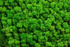 Zielona mech tekstura dla twój projekta Zdjęcie Stock