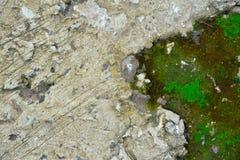 Zielona mech tekstura, tło w kamiennej naturze i obrazy royalty free