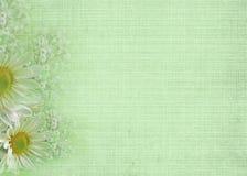 zielona miękka część Obrazy Stock