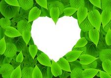 zielona miłość Zdjęcie Royalty Free