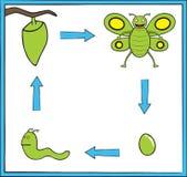 zielona motyl metamorfizacja ilustracja wektor