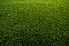 Zielona murawa przy boisko do piłki nożnej Obrazy Royalty Free