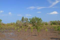 Zielona namorzynowa ekologia i niebieskiego nieba plenerowy krajobrazowy tło fotografia royalty free