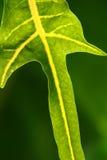 zielona natura Zdjęcia Stock