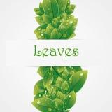 Zielona natura opuszcza wektorowego tło Zdjęcie Stock