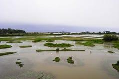 Zielona naturalna rezerwa przy wyspą Cona Fotografia Royalty Free