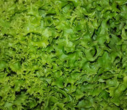 Zielona naturalna sałatka Obrazy Stock