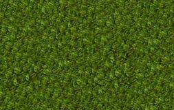 Zielona naturalna tarta zmielona koperkowa świeża apetyczna baza fotografia stock