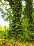 Zielona naturalnego parka krajobrazu sceneria przy YS Spada, Jamajka zdjęcie stock