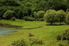 zielona natury Zdjęcie Stock