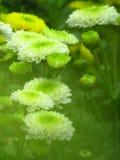 zielona natury Zdjęcia Stock